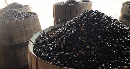 ブラジル ハンショグランデ農園 ワイン樽